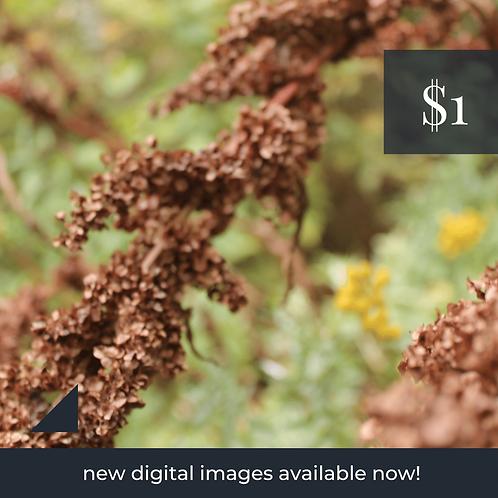 Digital Web Graphic   Natural Flora   Photography