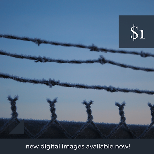 Digital Web Graphic | Frosted Chainlink Fence at Sunrise | Photography