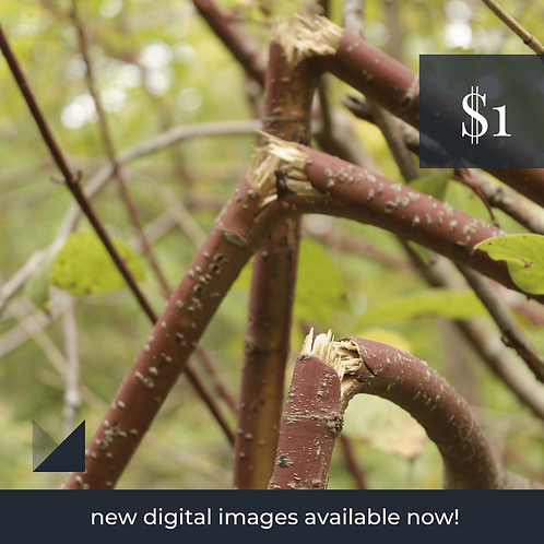 Digital Web Graphic   Broken Branches   Photography
