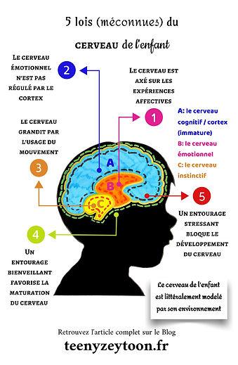 5-lois-méconnues-du-cerveau-de-lenfant-