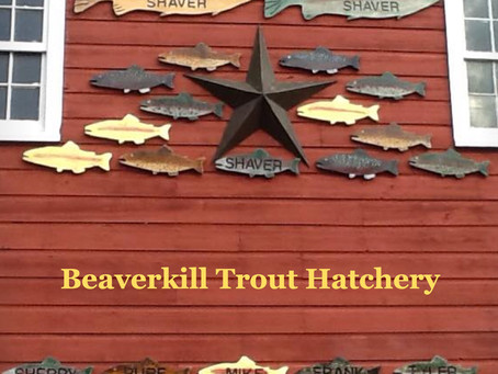Where Fishing Begins -- Beaverkill Trout Hatchery
