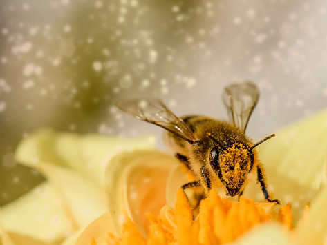 What Do Bees Do With Pollen?