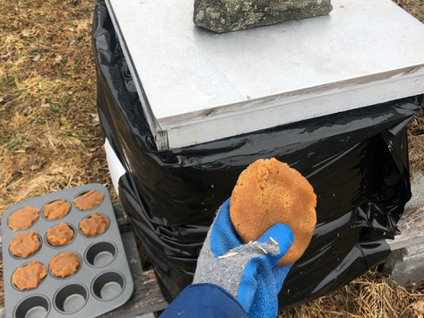 How the Bees Are Wintering