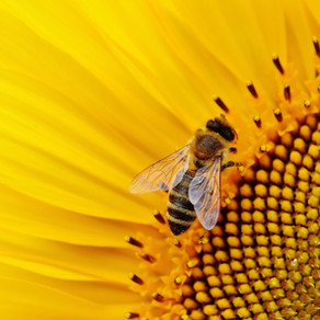 The Bee Movie.