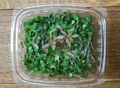 A Switch to Microgreens -- Agrarian Feast