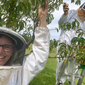 (Bee)Keeping Busy