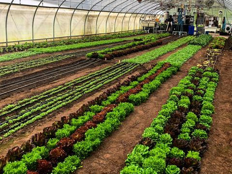 Neversink Farm