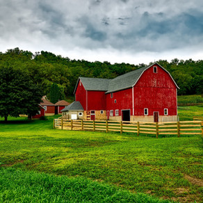 The Accidental Farm