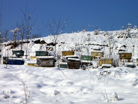 Hey Bees: Get Ready for Winter