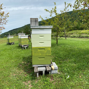 Bad Grade for Bee Communication