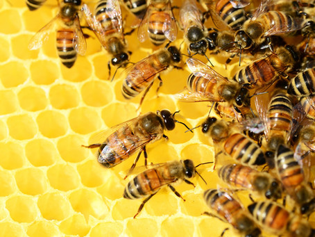 Welcome to the 2019 Honey Season