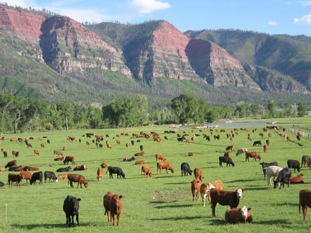 Essential Personnel - Six US Farmers Talk COVID-19