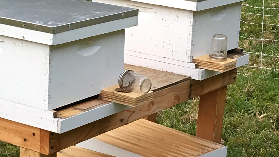 Twin Starter Hives