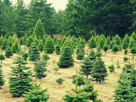 Louck's Tree Farm