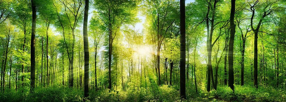 New Forest1.jpg