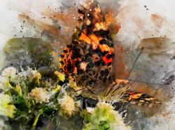 Butterfly Art-Edit