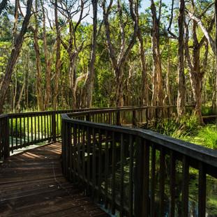 Alcheringa Trail