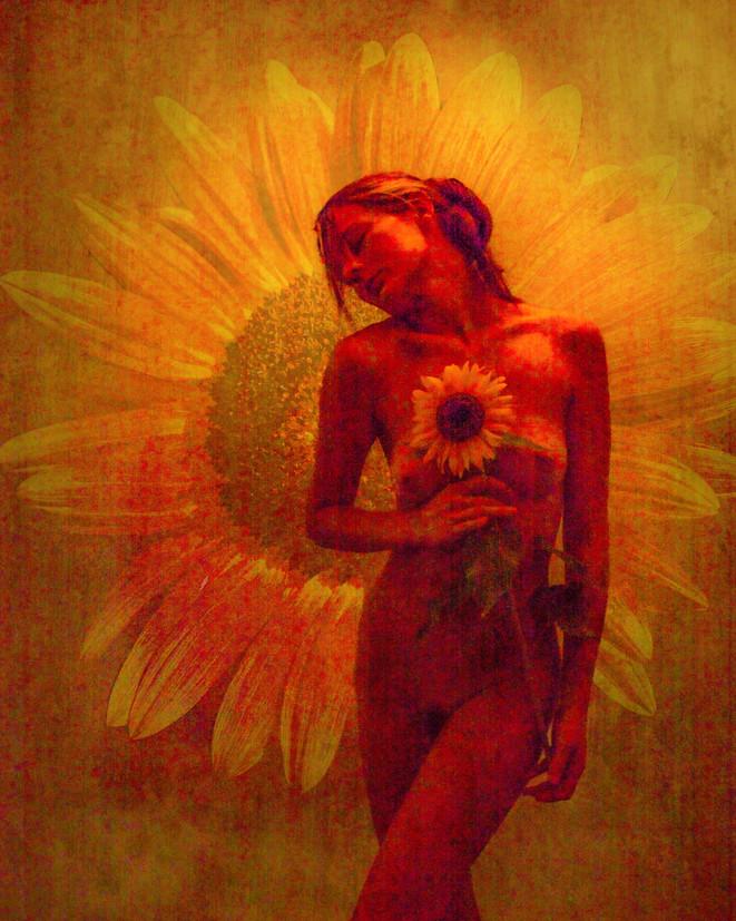 Sunflower_2899.jpg