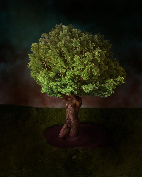 Arboration.jpg