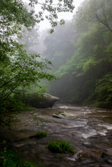 Bottom Creek - Sentinal_DSC6822