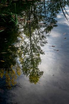 Autumn Reflection_DSC9352.jpg