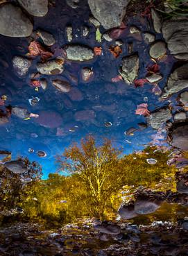 Reflection Window_DSC9731.jpg