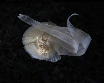 Onion Study DSC_3758b