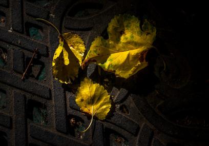 Matted Leaves_DSC8308.jpg