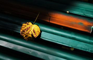 Taste of Autumn_DSC9953.jpg