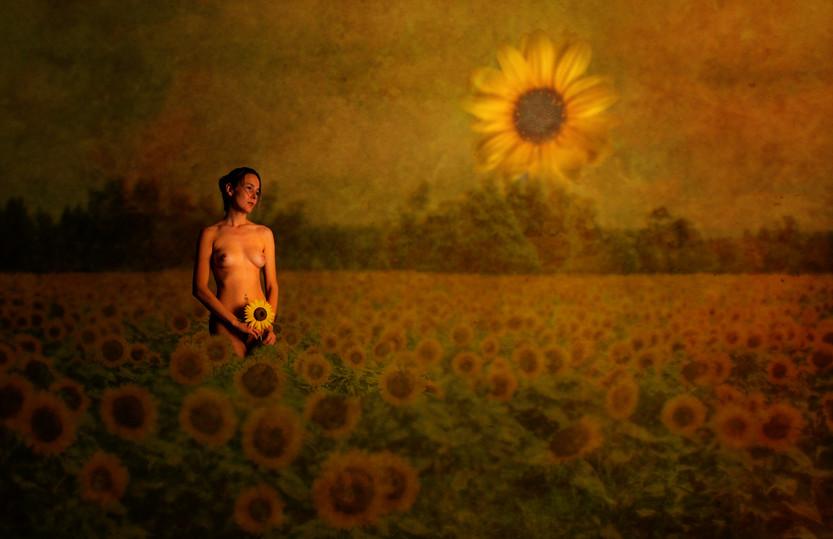 Sunflower_2861.jpg