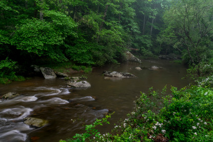 Bottom Creek - looking back_DSC6836