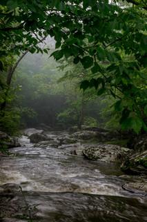 Bottom Creek - into the mist_DSC6850