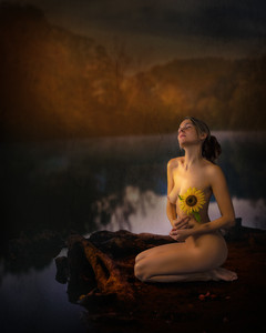 Sunflower_2998.jpg