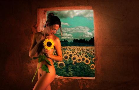 Sunflower_2880.jpg