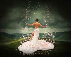 Rose Horizon.jpg