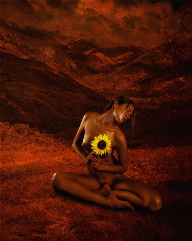 Sunflower Sunset_2962.jpg