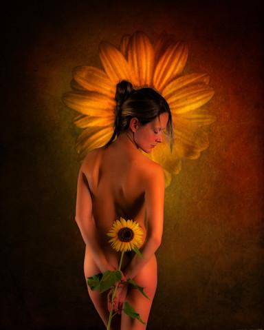 Sunflower_2867.jpg