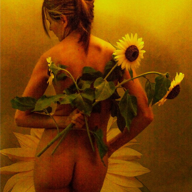Sunflower_2853.jpg