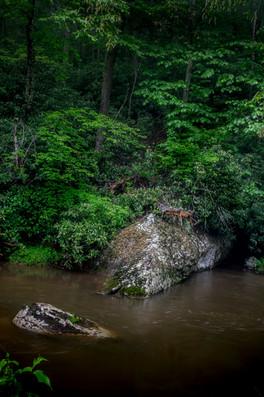 Bottom Creek - Relations_DSC6828