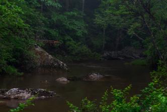 Bottom Creek - Primeval_DSC6840