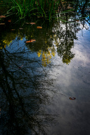 Autumn Reflection_DSC9349