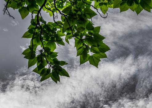 Looking Up_DSC7845C