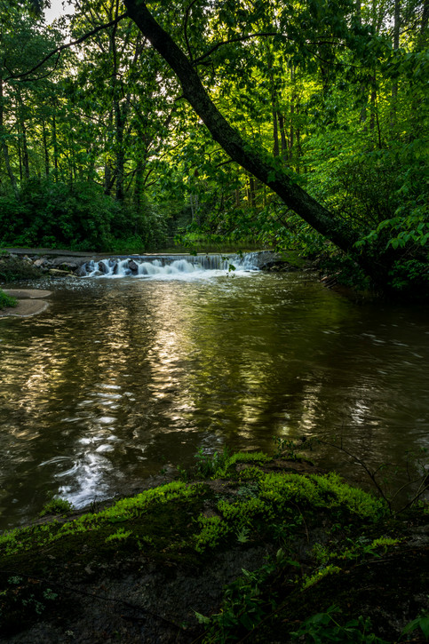 Bottom Creek_DSC6782