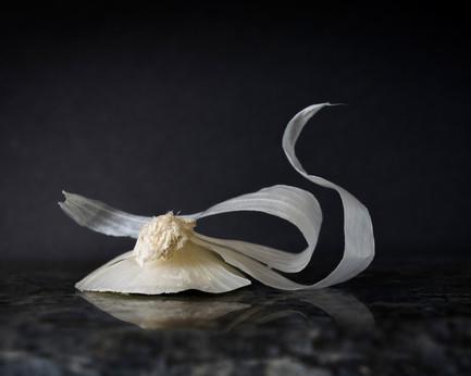 Onion Swan DSC_3808b