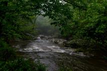 Bottom Creek - into the mist_DSC6845