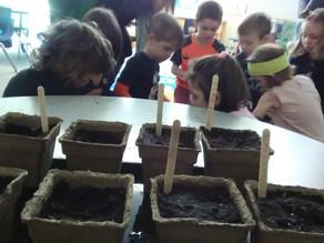 Seeds of Equinox