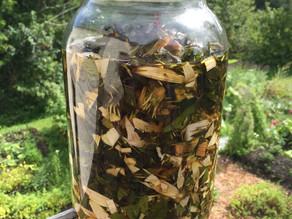 """Echinacea Tincture """"Immune Zoom"""" Recipe"""