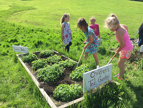 children herb tea school garden