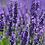 Thumbnail: Lavender Body Butter