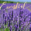Thumbnail: Lavender Sugar Scrub